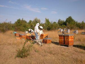 Les formations apicoles