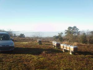 Une matinée aux ruchers