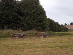 Les ruches au repos